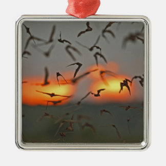 Mexican Free-tailed Bats Silver-Colored Square Decoration