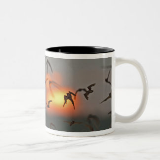 Mexican Free-tailed Bats Two-Tone Coffee Mug