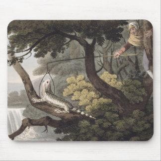 Mexican Lizard Catcher, engraved by Matthew Dubour Mouse Mat