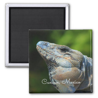 Mexican Spinytail Iguana Magnet