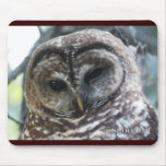 Mexican Spotted Owl Mousepad