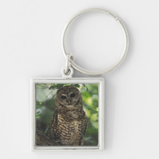 Mexican Spotted Owl On Perch In Gambel Oak Key Chains