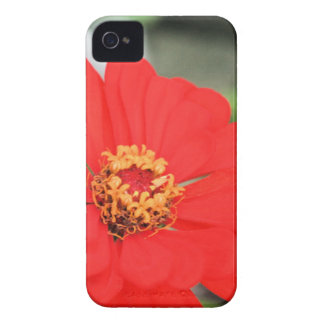 mexican sunflower iPhone 4 covers