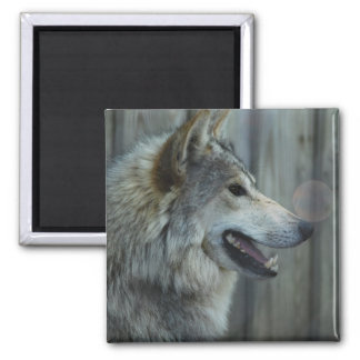 Mexican Wolf Magnet