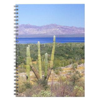 Mexico, Baja California Sur, Cardon Cactus at Notebook