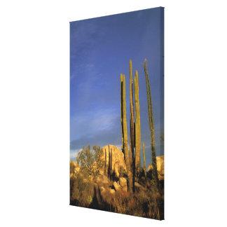 Mexico, Baja del Norte, Catavina Desert National 2 Gallery Wrapped Canvas