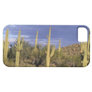 Mexico, Baja del Norte, Catavina Desert National 2 iPhone 5 Case