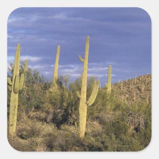 Mexico, Baja del Norte, Catavina Desert National 2 Square Sticker