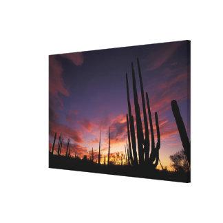 Mexico, Baja del Norte, Catavina Desert National 3 Gallery Wrap Canvas