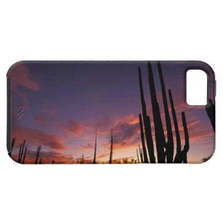 Mexico, Baja del Norte, Catavina Desert National 3 iPhone 5 Cases