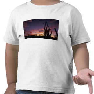 Mexico, Baja del Norte, Catavina Desert National 3 Shirts