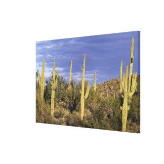 Mexico, Baja del Norte, Catavina Desert National Canvas Print