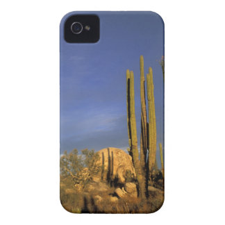 Mexico, Baja del Norte, Catavina Desert National iPhone 4 Cases