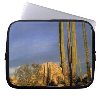 Mexico, Baja del Norte, Catavina Desert National Laptop Sleeves