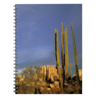 Mexico, Baja del Norte, Catavina Desert National Notebooks