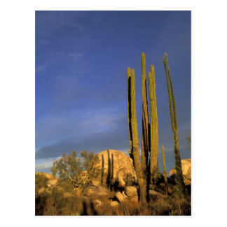 Mexico, Baja del Norte, Catavina Desert National Postcard