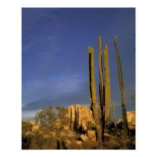 Mexico, Baja del Norte, Catavina Desert National Poster