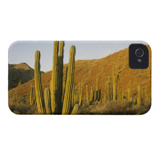 Mexico, Baja, Santa Catalina Island, Sea of Case-Mate iPhone 4 Case