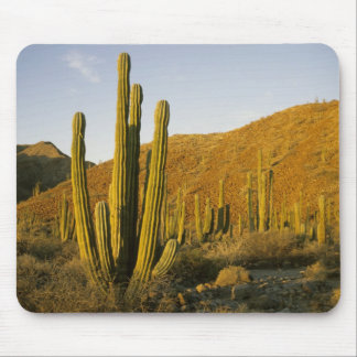 Mexico, Baja, Santa Catalina Island, Sea of Mouse Mat