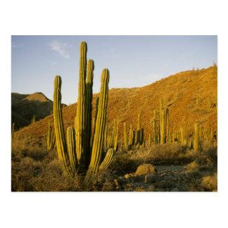 Mexico, Baja, Santa Catalina Island, Sea of Postcard