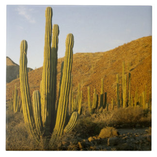 Mexico, Baja, Santa Catalina Island, Sea of Tile