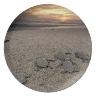 Mexico, Chiapas, Boca del Cielo Turtle Research Plate