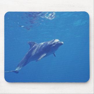 Mexico, Cozumel. Bottlenosed Dolphin Mouse Mat