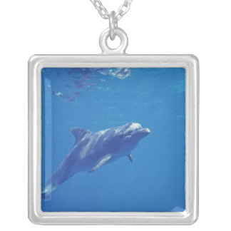 Mexico, Cozumel. Bottlenosed Dolphin Silver Plated Necklace