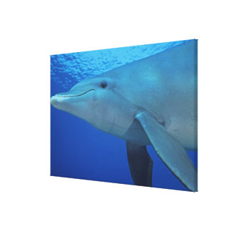 Mexico, Cozumel. Bottlenosed Dolphin, Tursiops 4 Canvas Print