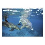 Mexico, Cozumel. Bottlenosed Dolphin, Tursiops Photo Art