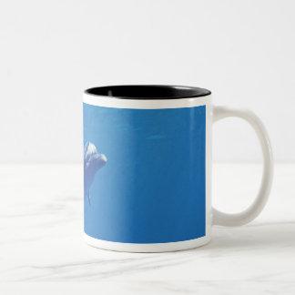 Mexico, Cozumel. Bottlenosed Dolphin Two-Tone Coffee Mug