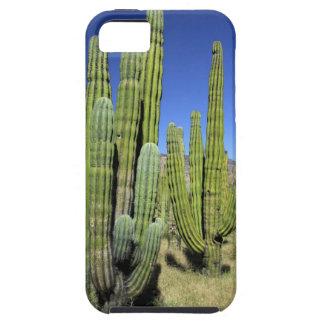 Mexico, Sonora, San Carlos. Saguaro & Organ Pipe iPhone 5 Case