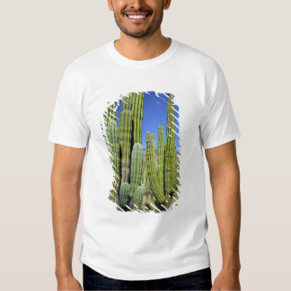 Mexico, Sonora, San Carlos. Saguaro & Organ Pipe T Shirts
