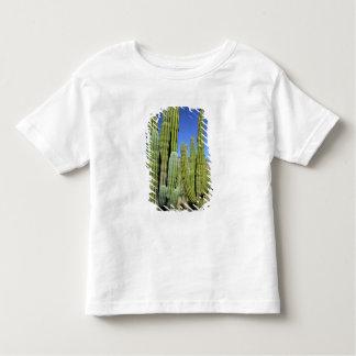 Mexico, Sonora, San Carlos. Saguaro & Organ Pipe Toddler T-Shirt