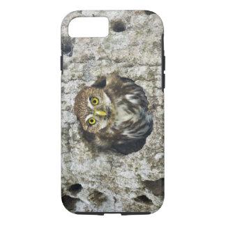 Mexico, Tamaulipas State. Ferruginous pygmy owl iPhone 8/7 Case