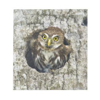 Mexico, Tamaulipas State. Ferruginous pygmy owl Notepad