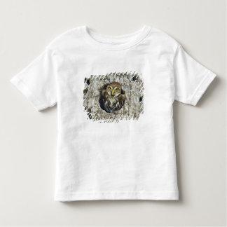 Mexico, Tamaulipas State. Ferruginous pygmy owl Tee Shirt