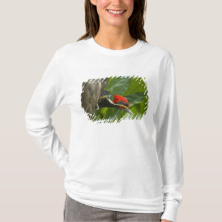 Mexico, Tamaulipas State. Male lineated T-Shirt