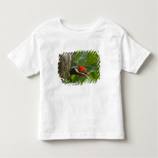 Mexico, Tamaulipas State. Male lineated Toddler T-Shirt