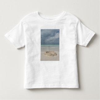 Mexico, Yucatan, Isla Mujeres Island of T Shirt