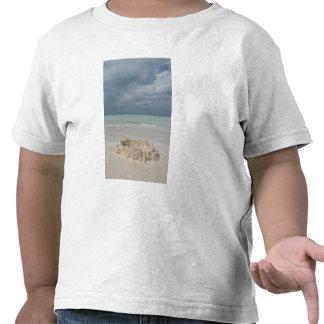 Mexico Yucatan Isla Mujeres Island of Tee Shirts