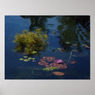 Miami Beach Botanical Garden Print