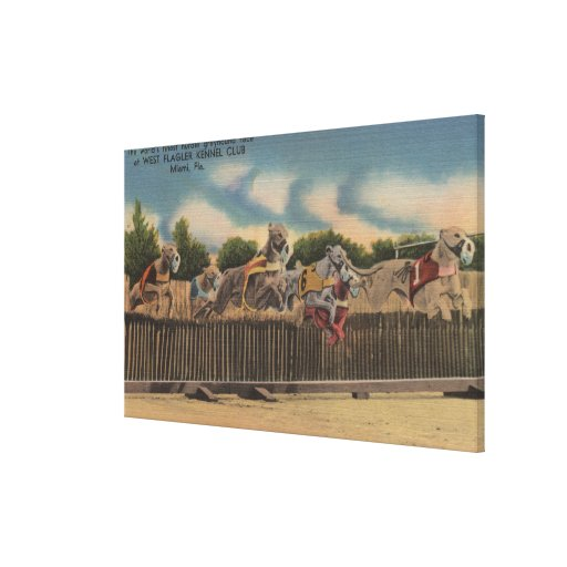 Miami, FL - Greyhound Dog Race at Kennel Club Gallery Wrapped Canvas