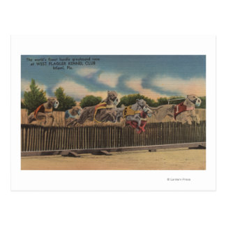 Miami, FL - Greyhound Dog Race at Kennel Club Postcard