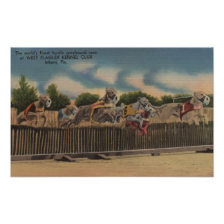 Miami, FL - Greyhound Dog Race at Kennel Club Poster