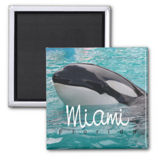 Miami Florida Orca Whale Photo Fridge Magnet