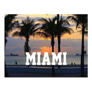 Miami Florida Palm Trees Postcard