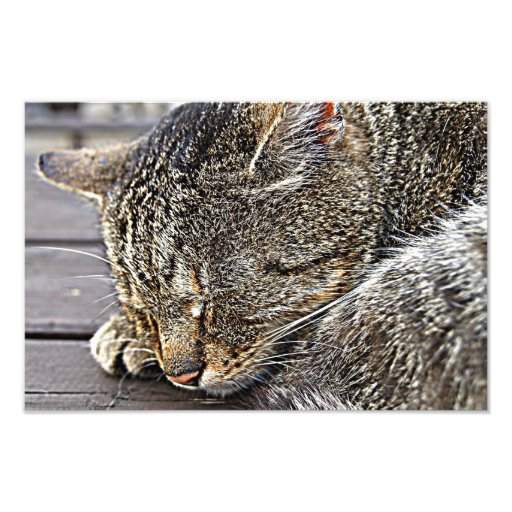 Miaow Photo Art