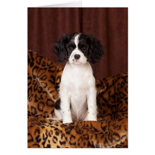 Micah rare coloured Cavalier King Charles Spaniel Card