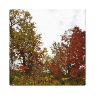 Michigan Autumn Treescape Printed Canvas Canvas Print